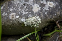 reference_9 (TLCStudentReferences) Tags: helenastackhouse plants lichen concrete ruins moss leaves fungi newzealand nz rocks tree texture rust