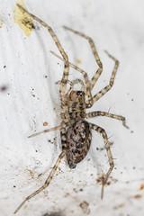 254/365  Spider
