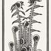 Ferns (1920) by Julie de Graag (1877-1924). Original from the Rijks Museum. Digitally enhanced by rawpixel.