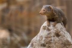 Pairi Daiza II (thanks for > 1 M. views) Tags: pairidaiza zoo dierentuin belgie belgium animal nature bmeijers canon bertmeijers