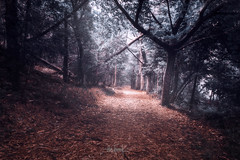 Fairy tale without the fairies (RuiFAFerreira) Tags: light landscape fairy tale woods creativeedit shadow spain canon wide efs1018mmf4556isstm trees color conceptual