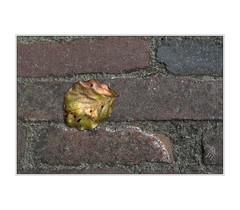DSC_0379 (imagerme) Tags: stone street leaf autumn golden sunshine minimal bricks minimalistic