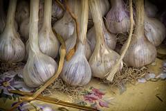 Garlic Cloves (DJ Wolfman) Tags: vegetables roots plant food market farmers summer ohio hudson olympus olympusomd 12100mmf4zuiko zuiko zd micro43