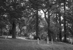 peaceful place (verona39) Tags: cemetery trees graves blackwhite peaceful serene
