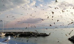 Heavy cloud hides the sunset (Channah07) Tags: heavy cloud hide sunset seagull marina