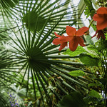 Flowers and palm trees thumbnail