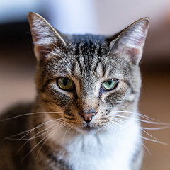 Javacatscafe08Sep20180413.jpg (fredstrobel) Tags: javacafecats javacatscafe atlanta places animals ga pets cats usa georgia unitedstates us