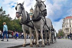 Horse Carriage, Old Town, Prague. (Manoo Mistry) Tags: nikon nikond5500 tamron18270mmzoomlens tamron horsecarriage horses sky perspective composition oldtownprague czechrepublic