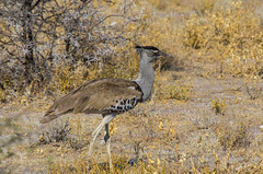 Namibie ( Philippe L PhotoGraphy ) Tags: afrique namibie etosha park parc philippe l photography