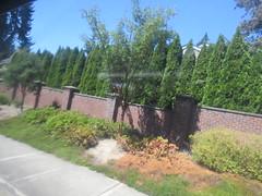 IMG_8329 (Andy E. Nystrom) Tags: bellevue washington wa bellevuewashington