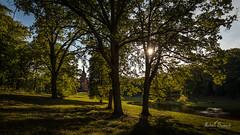 Pałac Wąsowo (Michał Banach) Tags: canonef1635mmf4lisusm canoneos5dmarkiv greaterpoland pałacwąsowo poland polska wąsowo landscape nature outdoor palace park poutside summer tree trees