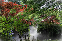 Sous bois (TerraBotanica) (Crilion43) Tags: arbres région angers feuillesfeuillage maineetloire ciel parc hortensia fleursetplantes paysdelaloire paysages massif nuages villes jardin
