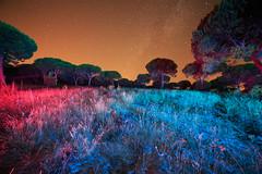 PineFieldPainting (Hugo Baptista) Tags: lightpainting longexposure lightart alentejo melides pine