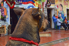 Miradas (Tato Avila) Tags: colombia colores cálido casas boyacá nobsa perro dog miradas retrato colombiamundomágico nikon naturaleza portrait