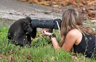 Mono curioso
