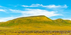 Trapezoid (Photosuze) Tags: landscape colorful california spring clouds sky flowers green carrizoplain grassland