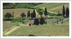 Les vignes de Toscane -  The vineyards of Tuscany (diaph76) Tags: italie italy toscane extérieur vignes vines arbres trees paysage landscape verdure greenery cabanon shed