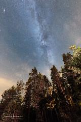 Shine bright (SamppaV) Tags: milkyway lohja skywatcher staradventurer trackingmount forest andromeda galaxy finland syyskuu september longexposure nightphotography sequa