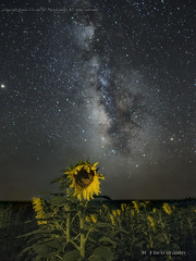 Sunflower2-edit (jamesclinich) Tags: sunflower milkyway nighttime stars sky texas tx springlake earth lowlevellighting flowers field tripod olympus omd em5mkii mzuiko1240mmf28pro jamesclinich sequator stacked adobe photoshop topaz denoise clarity detail