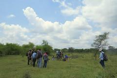 IMG_6199 (mohandep) Tags: hessarghatta lakes karnataka butterflies birding nature wildlife insects signs food
