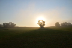 L'éclat du jour (Croc'odile67) Tags: nikon d3300 sigma contemporary 18200dcoshsmc paysage landscape brume mist levéedesoleil ciel sky arbres trees nature