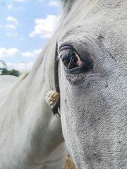 Horse look (aitorsnap) Tags: huawei huaweip20pro huaweip20prophotography huaweip20procamera smartphone smartphonephotography horse horses caballo caballos animal animals animales animali bokeh bokehphotography portrait portraits retrato retratos cielo cielos sky cloud clouds nube nubes azul foreground