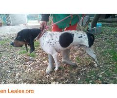 CIRE BUSCA ADOPCION (Leales.org • tu guía animable) Tags: adopta adoptar adoptanocompres noalmaltratoanimal adopción sebusca extraviado perdido perro gatos lealesorg