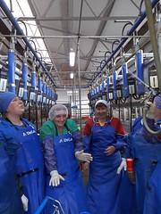 ufJImkF6CEg (ShyShyny) Tags: доярка доярочка фартук передник клеенка перчатки дойка доение apron milking gloves rubber pvc