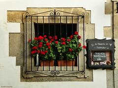 Geraniums (ricardocarmonafdez) Tags: ventana window reja fence grid geranios geraniums flowers rojo red verde green hotpeppers nikon d850 24120f4gvr stone sunlight texture detail color