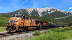 UP 5545 ~ Crowsnest (Chris City) Tags: train railway railroad mainline siding mountain mixed freight uprr cpr crowsnest