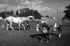 red Baron FPP110 test 062 (Leslie Lazenby) Tags: redbaron countyfair fremont oh horses showing fpp filmphotographypodcast filmphotographyproject fpp110 olympus om2n zuiko 50mm f14 35mm filmtest developertest