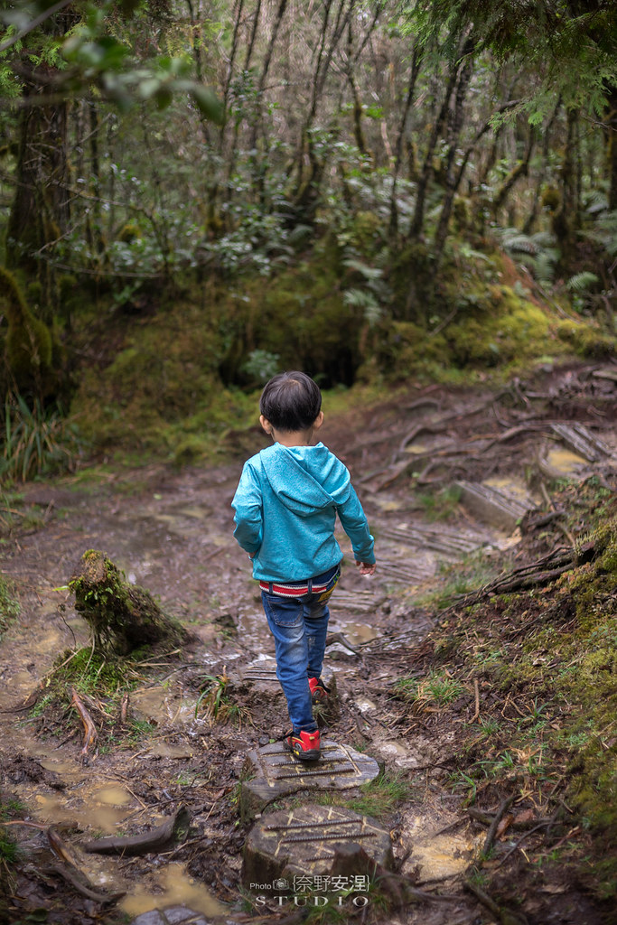 太平山翠峰湖環山步道 |走在泥濘的道路上,只為途中美景 | 宜蘭大同鄉37