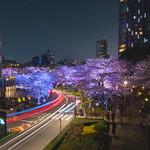 Roppongi Hills Sakura Lightup - Tokyo, Japan thumbnail