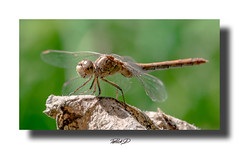 (Patrick.44) Tags: libilulle macro nature insect nikond750 sigma150