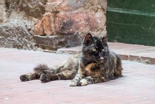 stray cats_03