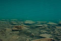Blue water, Lake Louise. (marcella.cavelli) Tags: canada britishcolumbia alberta squamish whistler banff jasper clearwater sky falls tree hike hiking trail trip snow lake wood ab bc