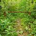 Pinnacle Pass Trail - 02