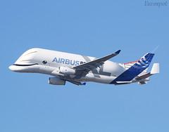F-WBXL Airbus Beluga XL (@Eurospot) Tags: fwbxl airbus beluga xl toulouse blagnac