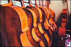 The cello room (G. Postlethwaite esq.) Tags: dof sonya7mkii sonyalphadslr staffordshire timtoft bokeh cellos depthoffield fullframe instruments mirrorless photoborder selectivefocus strings violins