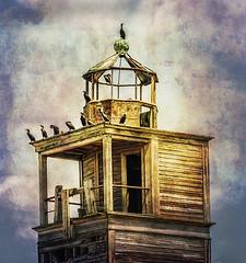 Cormorants, Fort Carroll Sanctuary, Baltimore Harbor, Maryland, USA (anitabower) Tags: cormorants birds baltimore baltimoreharbor maryland chesapeakebay fortcarroll