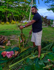"Viliame ""Bill"" Solomone prepares the pig for the lovo. (Dave Byng) Tags: 2018 villagers winter people forestcamp operationwallacea beach natewabay students opwall portrait island scientificexpedition vanualevu southpacific vusaratu fiji expedition lovo feast earthoven"