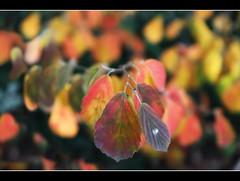 it's time (amdolu) Tags: autumn colour september amdolu birthday leaves bokeh
