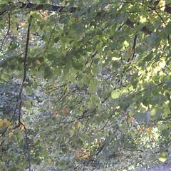 Outside my window.  #fujixpro1 #supertakumar #autumn (continavxm) Tags: fujixpro1 supertakumar autumn foliage sheffield