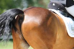 _MG_9719 (dreiwn) Tags: dressurprüfung dressurreiten dressurpferd ridingarena reitturnier reiten reitplatz reitverein reitsport ridingclub equestrian horse horseback horseriding horseshow pferdesport pferd pony pferde tamronsp70200f28divcusd dressur dressuur dressyr dressage