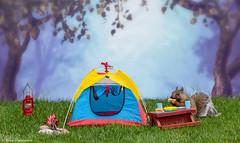 Squirrels Camping 2018 (hey its k) Tags: 2018 backyard camping squirrels hamilton ontario canada ca imag6624e tent hotdog corn canon6d