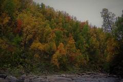 trees (KvikneFoto) Tags: høst autmn fall ya ydalen landskap nikon1j2 natur