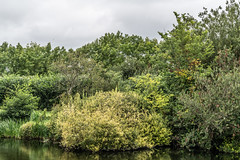 BISHOPSMEADOWS WALK SECTION OF THE NORE LINEAR PARK [LENGTH OF WALK ABOUT SIX FIELDS]-143197 (infomatique) Tags: bishopsmeadows kilkenny naturewalk naturetrail sixfields streetsofkilkenny streetsofireland infomatique fotonique august 2018 holiday sony a7riii