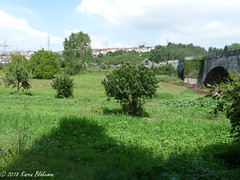 Bridge of Justinian, Serdivan, Sakarya, Turkey (3) (karenblakeman) Tags: bridgeofjustinian justinianosköprüsü besköprü serdivan sakarya turkey 2018 july trees fruittrees tr beşköprü