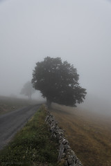 road to nowhere (d7000pb) Tags: aubrac aveyron