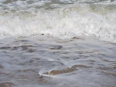 049-P1030834 LR (1gl) Tags: 2018 carpet carpets killer gumbo norfolk wintertononsea beach dogs coast